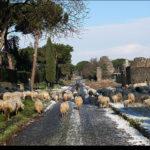 appia-antica-pecore